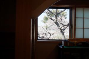 瑜伽庵 水屋からの桜