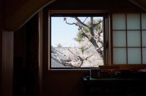 今年の瑜伽庵水屋からの感応寺の桜