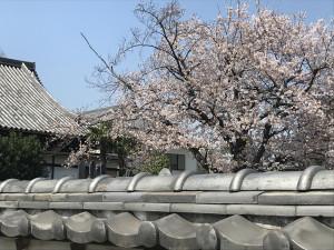 感應寺の桜と自性院